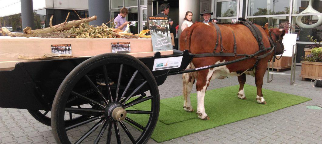 Rouwvervoer koe en wagen